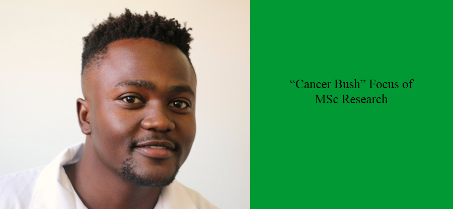 Cancer-Bush-Focus-of-MSc-Research